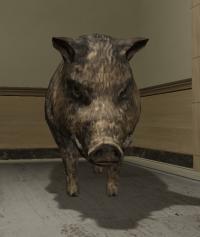 a_c_boar