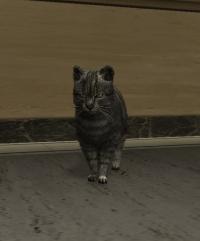a_c_cat_01