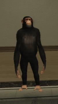 a_c_chimp