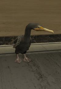 a_c_cormorant