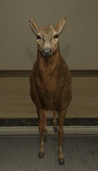 a_c_deer