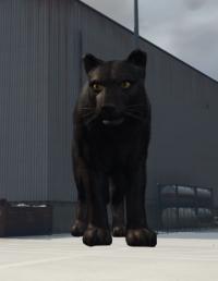 a_c_panther