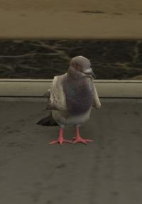 a_c_pigeon
