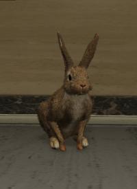 a_c_rabbit_01