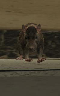 a_c_rat